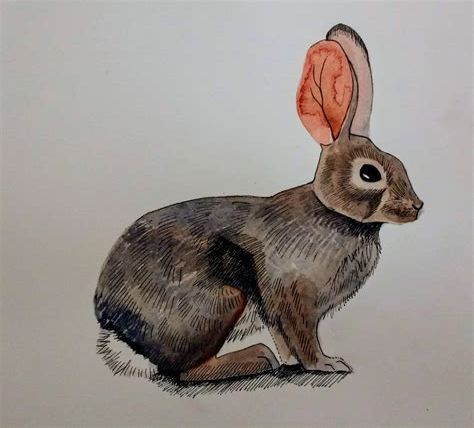 Animal Drawing - Gregdorrance Com