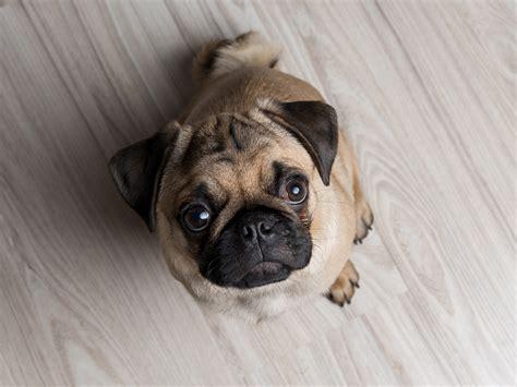 Apartment Dogs Math Wallpaper Golden Find Free HD for Desktop [pastnedes.tk]