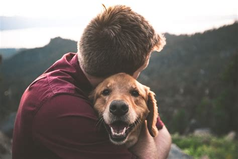 Apartment Pets Math Wallpaper Golden Find Free HD for Desktop [pastnedes.tk]