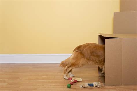Apartments That Allow Pets Math Wallpaper Golden Find Free HD for Desktop [pastnedes.tk]