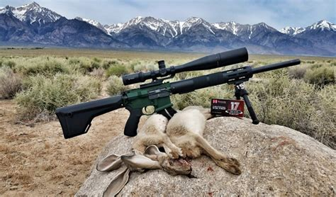 Are Ar 15 Used For Hunting Or Like Hunting Rifle