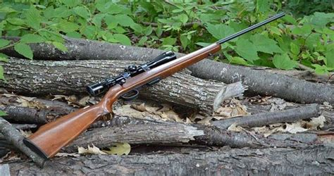 Argument For Air Rifle Hunting