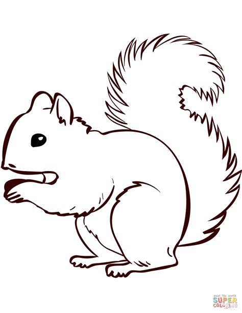 Ausmalbild Eichhörnchen Baby
