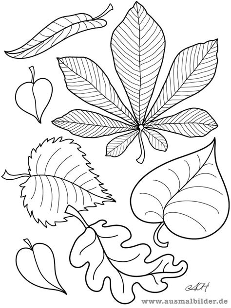 Ausmalbilder Blätter Herbst