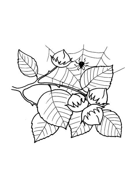 Ausmalbilder Blätter Und Früchte