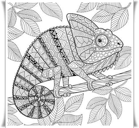 Ausmalbilder Chamäleon Mandala