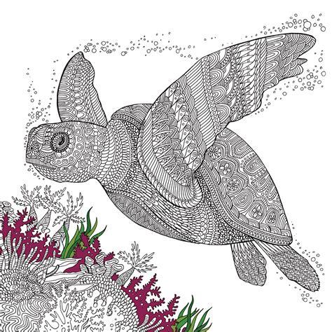 Ausmalbilder Erwachsene Schildkröte