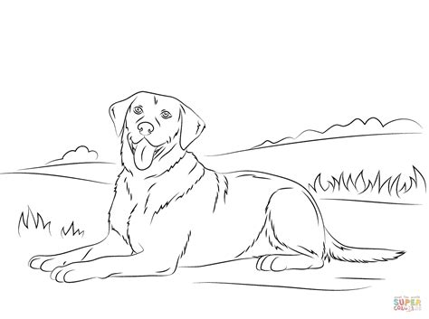 Ausmalbilder Hunde Labrador