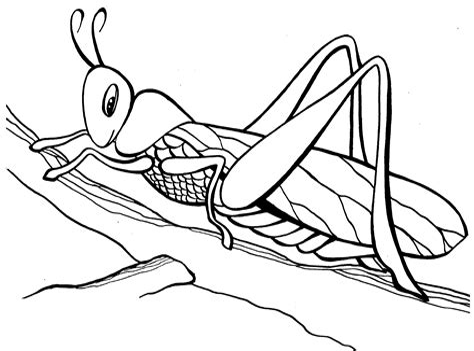 Ausmalbilder Insekten Kostenlos
