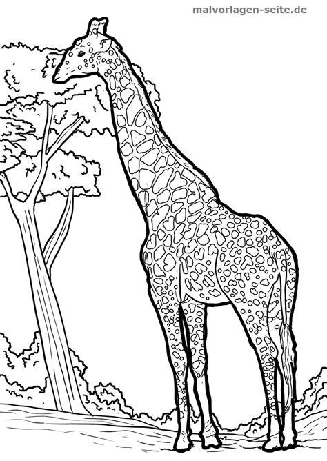 Ausmalbilder Kostenlos Ausdrucken Giraffe