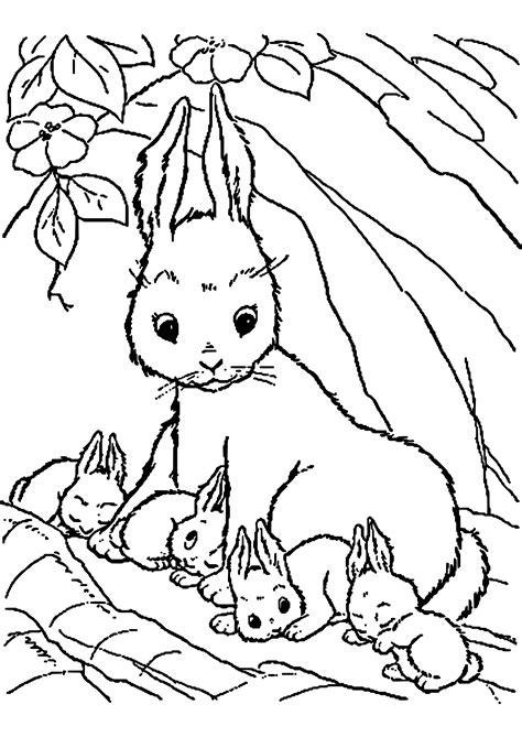 Ausmalbilder Tiere Hasen