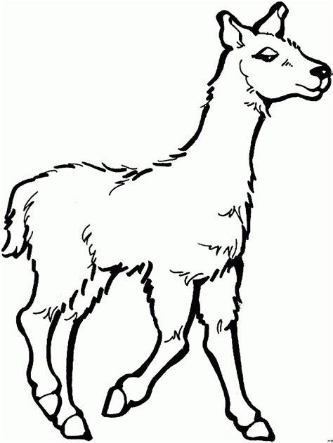 Ausmalbilder Tiere Lama