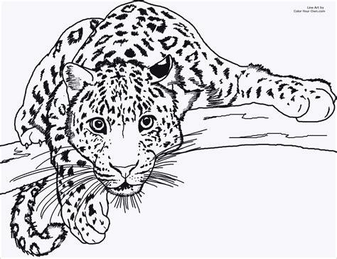 Ausmalbilder Tiere Leopard