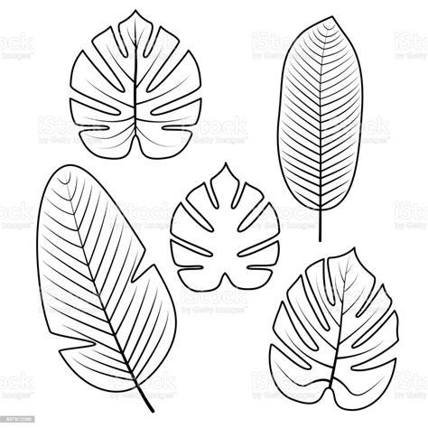 Ausmalbilder Tropische Blätter