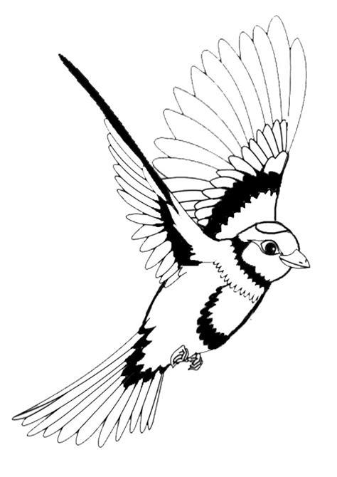 Ausmalbilder Vögel Kostenlos Ausdrucken