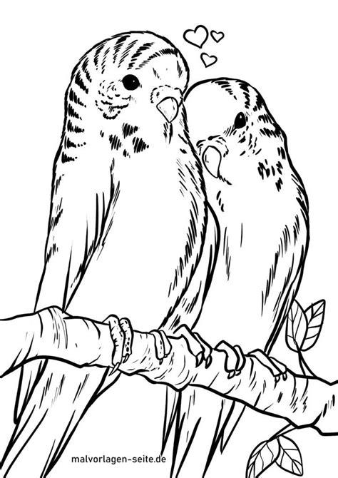 Ausmalbilder Vögel Wellensittich