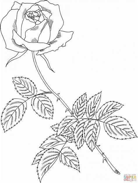 Ausmalbilder Zum Ausdrucken Rosen