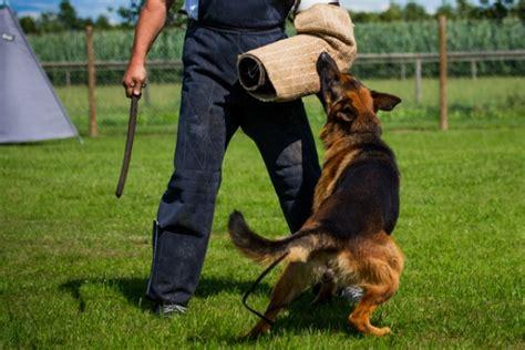 benefits of protection dog training.aspx Image