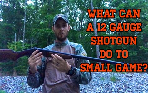 Best 12 Gauge Shotgun For Small Game