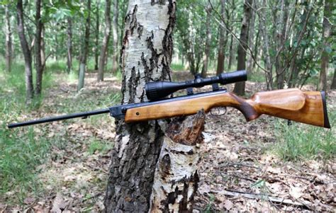 Best 22 Air Rifle For Squirrels