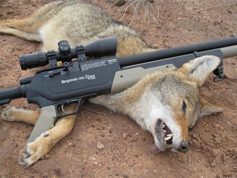 Best Air Rifle Coyote Hunting