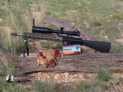 Best Ammo For Prairie Dog Hunting