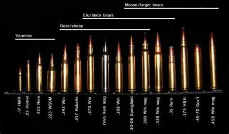 Best Caliber For Deer Rifle
