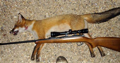 Best Fox Hunting Rifles
