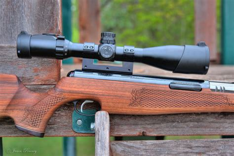 Best Pellet Rifle For Squirrel Hunting