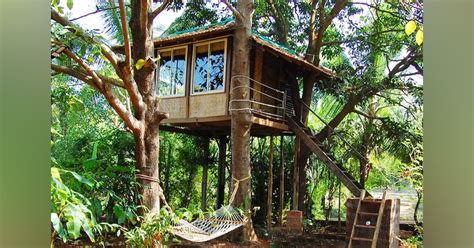 Best Rifle To Shoot Unwanted Birds Around Dwellings