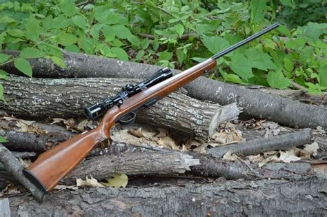 Best Rimfire Rifle For Squirrel Hunting