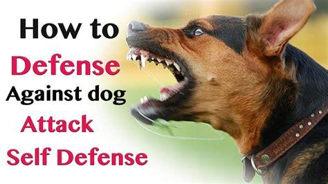 Best Self Defense Against Dog Attack
