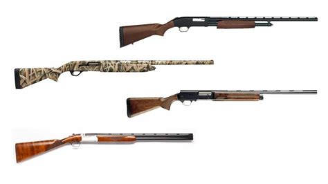 Best Shotgun Ammo For Quail Hunting And How Many Shotgun Shells In An Ammo Can