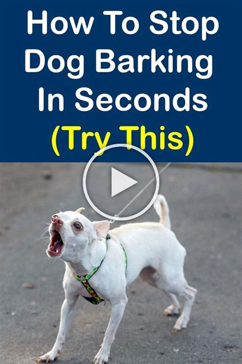 best way to stop barking dog Image
