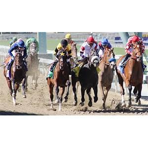 Best best winning horse racing system online