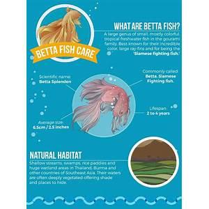 Betta fish care ebook: betta fish facts & secrets, keeping betta fish healthy, how to breed bettas coupon code