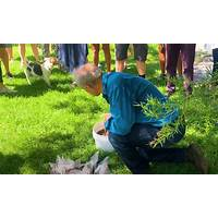Discount biodynamic farming secrets