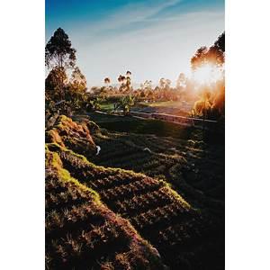 Discount biodynamic farming secrets