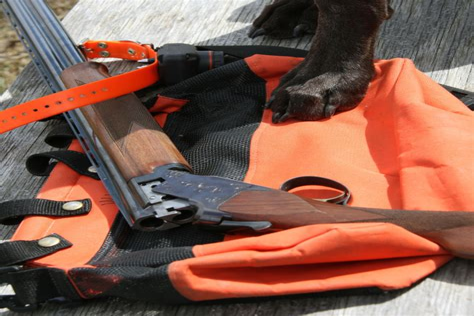 bird dog training missouri.aspx Image
