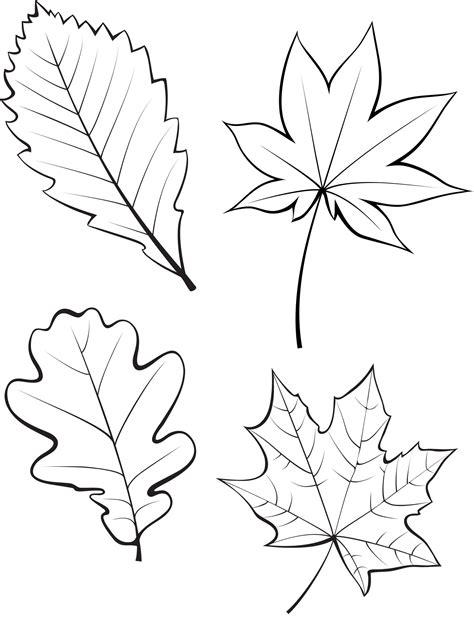 Blätter Herbst Malvorlage