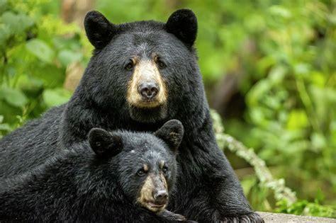 Black Bear Self Defense