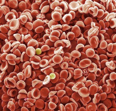 Blood Stool