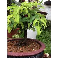 Bonsai gardening secrets free tutorials
