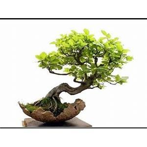 Bonsai gardening secrets discover the wonders of bonsai! tips