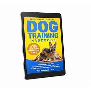 Brightdog academy: online dog and puppy training with proven results! brightdog academy: online dog and puppy training with proven results! promo codes