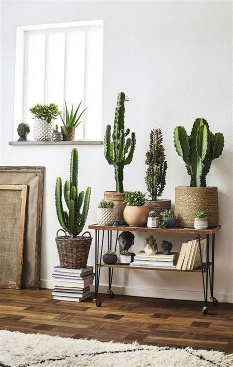 Cactus Home Decor Home Decorators Catalog Best Ideas of Home Decor and Design [homedecoratorscatalog.us]