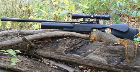 Can You Hunt Squirrels With An Air Rifle