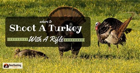 Can You Shoot A Turkey With A Rifle