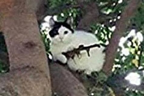 Cat In Tree With Assault Rifle