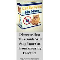 Free tutorial cat spraying no more brand new with a 16 2% conversion rate!